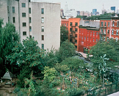 Photograph of a park with trees in a city